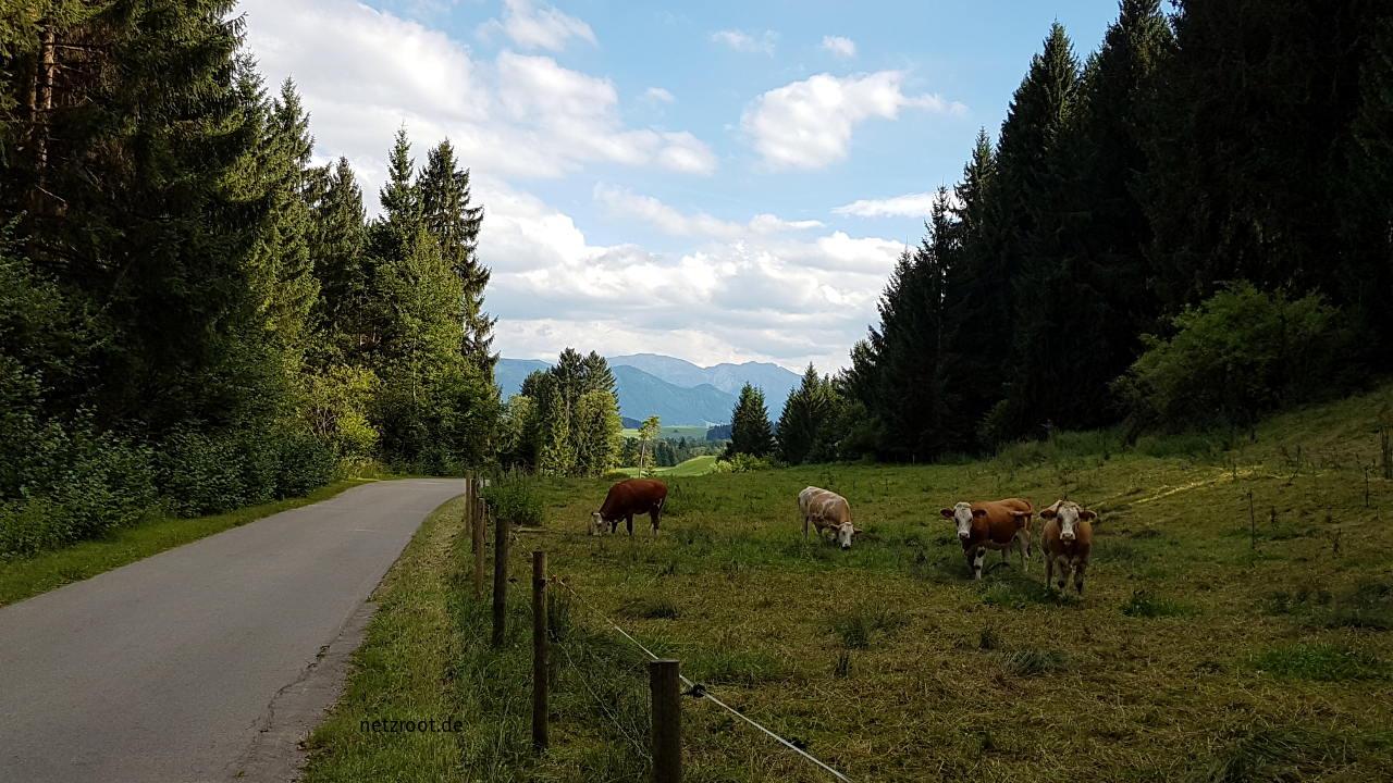 Hügeliger Weg nach Lechbruck